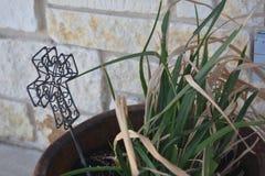 Draußen Houseplant lizenzfreie stockfotos