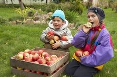 Draußen mit Äpfeln Stockfotos