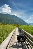 Drau river and drau cycle route Royalty Free Stock Photo