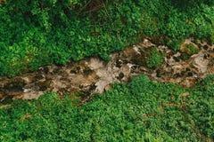 Draufsicht über Fluss und grünes Gras unter Holz im Sommerberg Stockfotografie