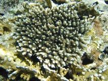 Draufsicht über Koralle in Rotem Meer Lizenzfreie Stockfotografie