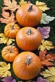 Draufsicht 459 von Halloween-Kürbisen in Folge angeordnet stockfoto