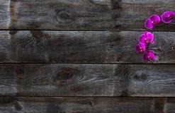 Draufsicht der echten alten hölzernen Tapete mit rosa Orchideen Lizenzfreie Stockfotografie