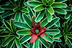 Draufsicht der Grünpflanze Stockbilder
