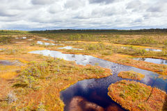 Draufsicht der Herbstlandschaft Enormer Sumpf in Estland Stockbilder