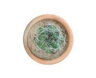 Draufsicht der kleinen Kaktuspflanze im Topfisolat auf weißem Hintergrund Lizenzfreie Stockfotografie