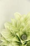 Draufsicht der Lilymelia Blume Stockfotografie
