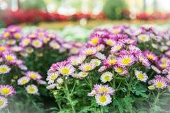 Draufsicht der Mun-Blumen-Hintergrund des Floristen, rosa und weißem flowe Stockbilder