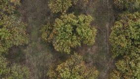 Draufsicht der orange Waldungsterrasse vor der Ernte in der spanischen Provinz stock video footage