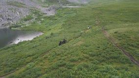 Draufsicht der Pferdeverfolgung clip Verfolgungsszene zu Pferd in der Natur stockfotos