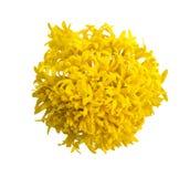 Draufsicht der Ringelblumenblume Lizenzfreie Stockfotografie