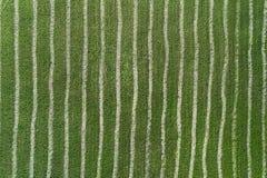 Draufsicht des abgestreiften grünen Feldes lizenzfreies stockbild