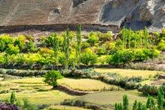Draufsicht des Feldes des grünen Tales mit unfruchtbaren Bergen herum, Ackerland, Leh, Ladakh, Indien Stockbild