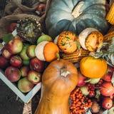 Draufsicht des frischen geernteten Gemüses: Kürbis, Mais, Äpfel, Eberesche stockfoto