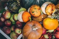 Draufsicht des frischen geernteten Gemüses: Kürbis, Mais, Äpfel, Eberesche stockbilder