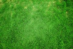Draufsicht des Hintergrundes des grünen Grases Lizenzfreie Stockbilder
