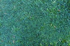 Draufsicht des Hintergrundes des grünen Grases der Natur Stockfoto