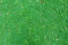 Draufsicht des Hintergrundes des grünen Grases der Natur Lizenzfreie Stockfotos