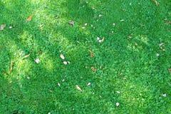 Draufsicht des Hintergrundes des grünen Grases der Natur Stockfotografie