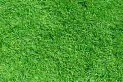 Draufsicht des Hintergrundes des grünen Grases der Natur Lizenzfreies Stockfoto