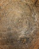 Draufsicht des Holzes schnitt mit Kreismuster Stockfotografie