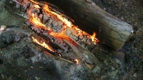 Draufsicht des Lagerfeuers des Niederlassungs-Brandes in Forest Slow Motion stock footage