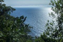 Draufsicht des Meeres durch die Bäume Stockfotografie