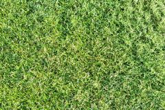 Draufsicht des Rasenhintergrundes des grünen Grases Stockfotos