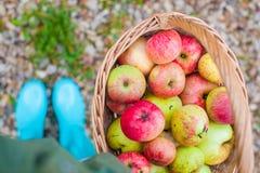 Draufsicht des Strohkorbes mit roten Äpfeln und Stockbilder