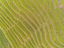 Draufsicht des terassenförmig angelegten Reis-Feldes im Hügel Lizenzfreies Stockfoto