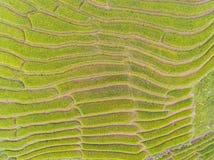 Draufsicht des terassenförmig angelegten Reis-Feldes im Hügel Lizenzfreie Stockfotografie