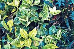 Draufsicht des tropischen Blattes Gelbes blaues Blatt in der digitalen Illustration des exotischen Gartens Lizenzfreie Stockfotos