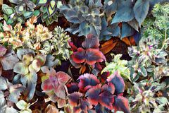 Draufsicht des tropischen Blattes Herbstsaisonorangenblatt Digitale Illustration des exotischen Gartens Stockfotografie