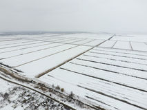 Draufsicht eines gepflogenen Feldes im Winter Ein Feld des Weizens im Schnee Stockfotografie
