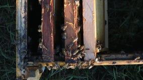 Draufsicht eines hölzernen Bienenstocks mit Rahmen für Bienenwaben, Bienen, die entlang sie kriechen Bienen fliegen herum stock video