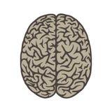 Draufsicht-Illustrationsgegenstand des Gehirns Stockfoto