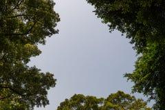Draufsicht mit Baumast und blauem Himmel Stockfotografie