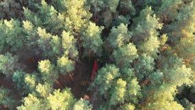 Draufsicht vom Brummen zum roten Löschfahrzeug, das entlang die Straße in einem Kiefern-Wald fährt stock video footage