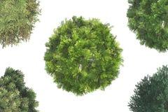Draufsicht von Bäumen Stockbilder
