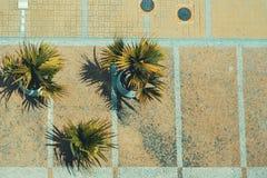 Draufsicht von dekorativen Palmen und von Pflasterstein in Rio lizenzfreies stockbild