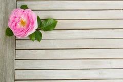 Draufsicht von einem rosa stieg, liegend auf einem weißen Holztisch lizenzfreies stockbild