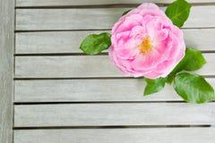 Draufsicht von einem rosa stieg, liegend auf einem weißen Holztisch lizenzfreies stockfoto
