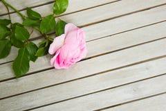 Draufsicht von einem rosa stieg, liegend auf einem weißen Holztisch stockfotos