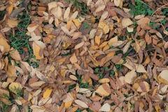 Draufsicht von gefallenen Blättern der Eberesche und der Birke Stockbild