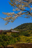Draufsicht von Kinkakuji-Tempel, Kyoto in Japan Stockbild