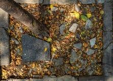 Draufsicht von trockenen Blättern, von Baumstamm, von defekter schwarzer Fliese und von Steinen auf dem Boden mit konkretem Rahm stockfoto