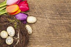 Draufsicht von Tulpen und von Nest mit Wachteleiern Lizenzfreie Stockfotos