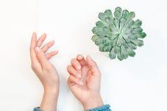 Draufsicht von weiblichen Händen mit sauberer nackter Maniküre auf dem weißen Hintergrund lizenzfreies stockfoto