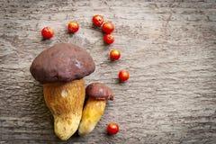 Draufsicht von zwei Pilzen Kiefer Bolete (Boletus pinophilus) verziert mit rotem EbereschenBeerenobst Lizenzfreies Stockfoto