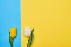 Draufsicht von zwei Tulpen nah miteinander gesetzt stockbild